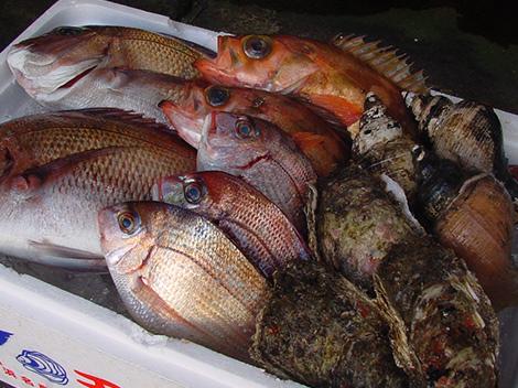 丸武鮮魚店 獲れたて魚介類