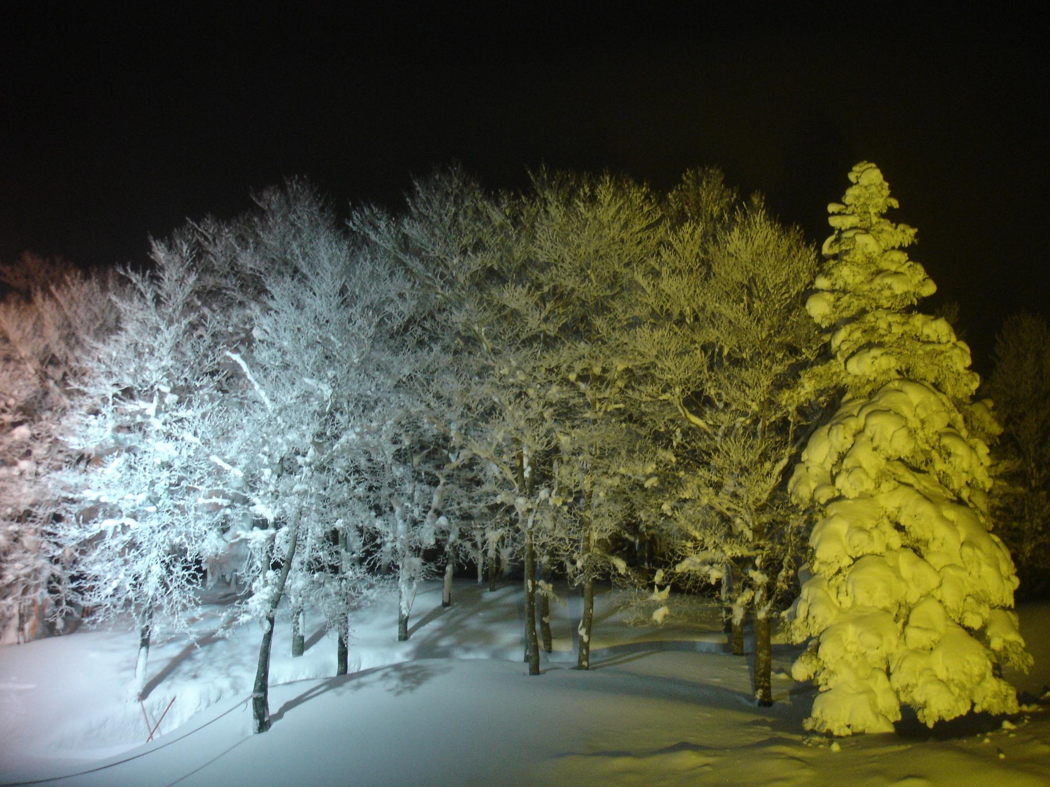 2006年1月 蔵王樹氷