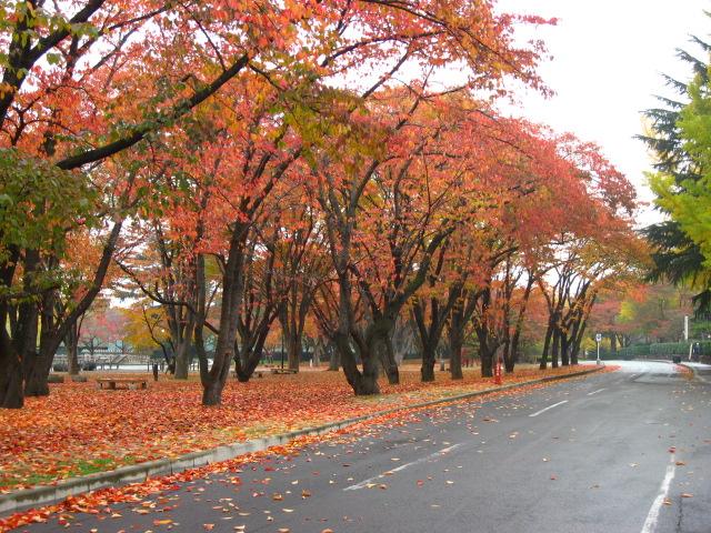 山形市 霞城公園