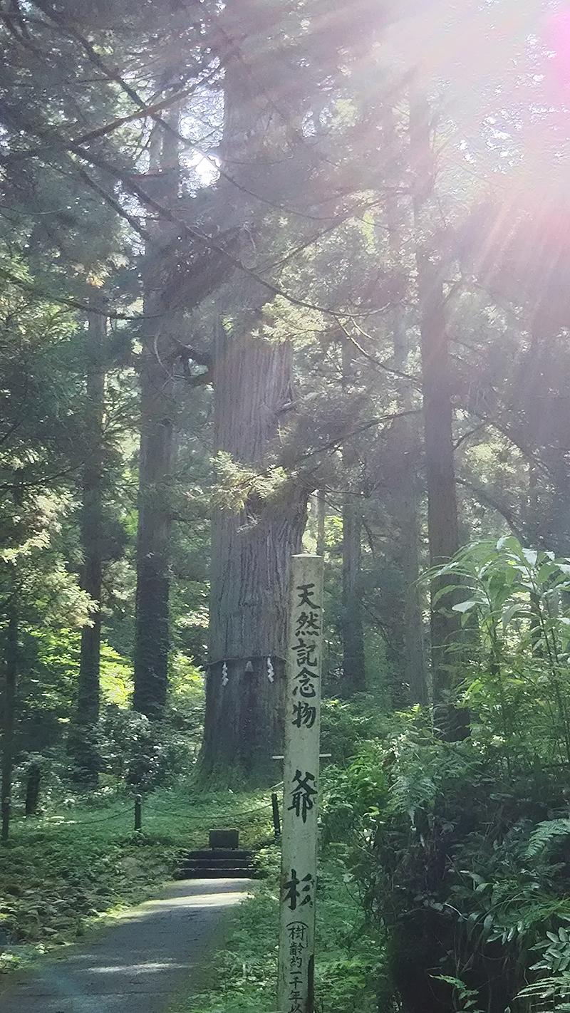 羽黒山 爺杉
