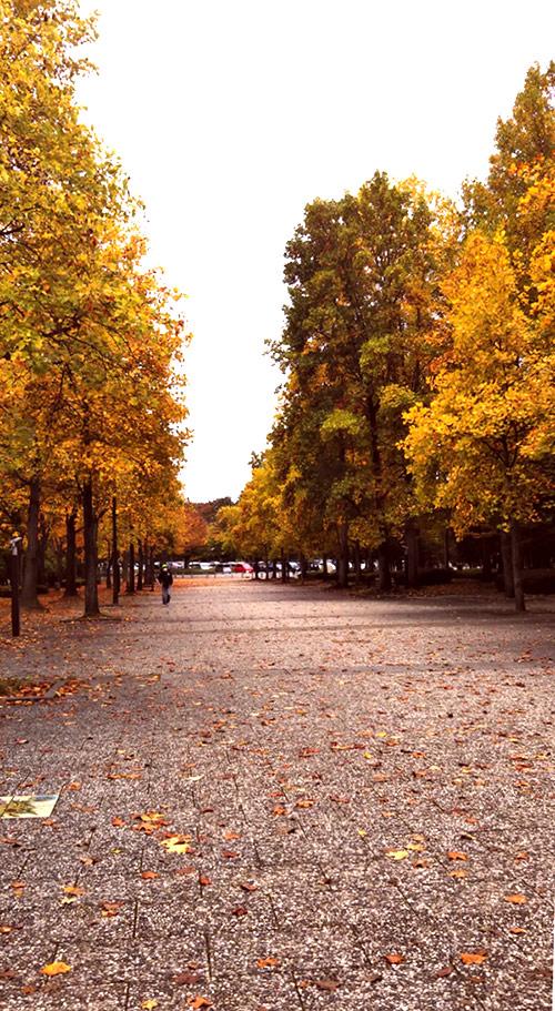 県総合運動公園(天童市)の紅葉