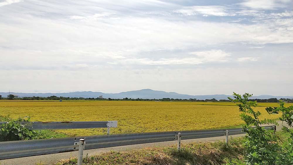 稲刈り_庄内平野
