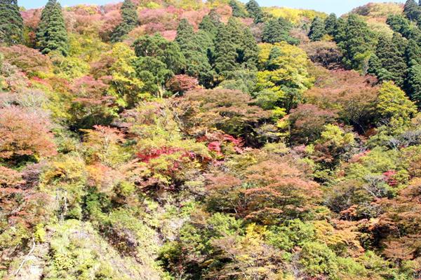 赤、オレンジ、ピンク、黄緑、緑。まるでお花見の時期のような華かな山もあり、どこの景色を見ても飽きることはありません。